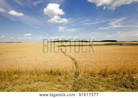 footpath in the field