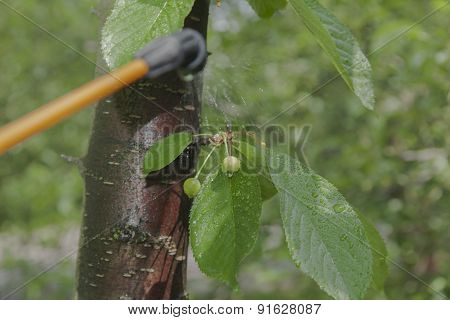 Device For Spraying Pesticide In The Garden.