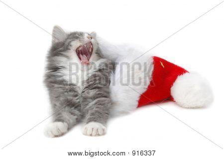 Tired Christmas Kitten