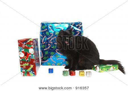 black cat with christmas gifts close-up on white background poster