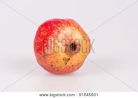 A single pomegranate isolated on studio background poster