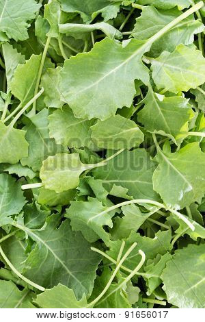 Background Texture Of Fresh Baby Kale Leaves