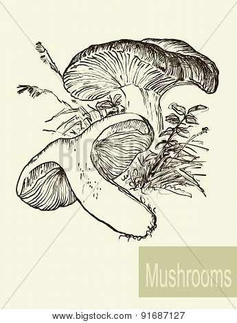 Set of linear drawing mushrooms, vintage vector illustration. Spongy mushrooms