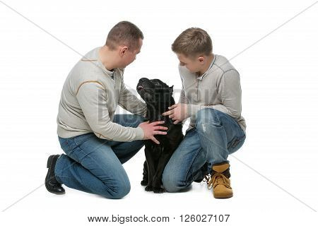 Shar pei dog showing tongue to its owners. Father and son. Family. Isolated over white background. Copy space.