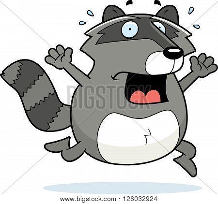 Raccoon Panic