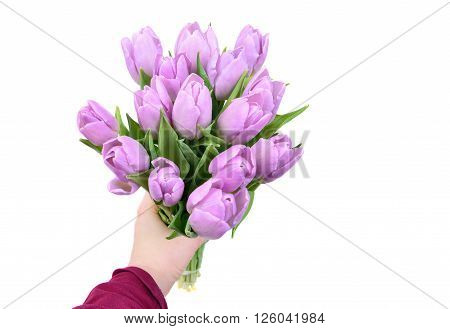 hand holding lilac tulips flowers in arm