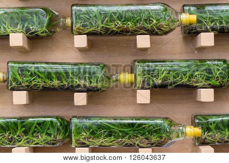 Orchid tissue culture in glass bottles taken as background