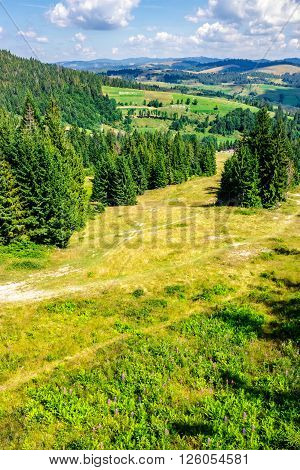 coniferous forest on a steep mountain slope