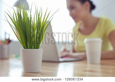Cheerful young woman is using a laptop and smiling. Focus on the plant on the desk in office