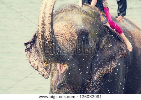 Elephant swimming in river,Chitwan,Nepal