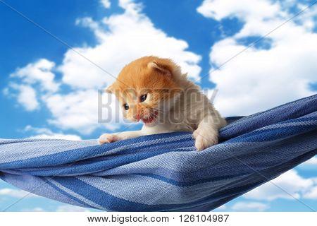 Red kitten in a hammock. Cute orange kitten in a blue hammock having rest, relax at blue sky background. Adorable sad pet. Small heartwarming kitten. Little cat. Animal isolated. High key