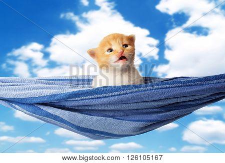 Red kitten in a hammock. Surprised Cute orange kitten in a blue hammock having rest, relax at blue sky background. Adorable sad pet. Small heartwarming kitten. Little cat. Animal isolated. High key