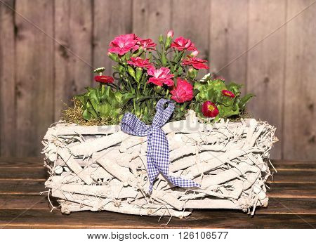 Gillyflowers and Daisies in a white wooden Basket with wooden background for decoration.