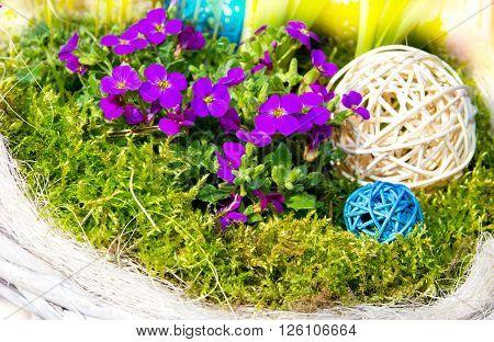 Aubretia with mos and raffia balls for early springtime garden decoration.