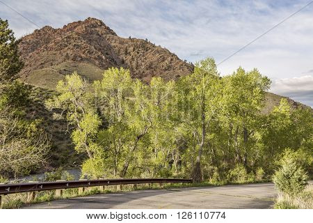 aspen tree with fresh green leaves - springtime in a mountain canyon of the Cache la Poudre River near Fort Collins, Colorado