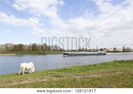 Wijk bij Duurstede, netherlands, 11 april 2016: white horse grazes on rhine embankment opposite stronghold wijk bij duurstede in the netherlands while cargo ship passes