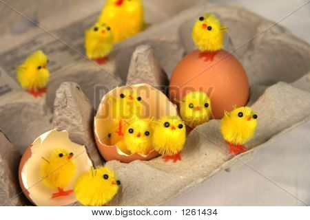 Chicks Gathering