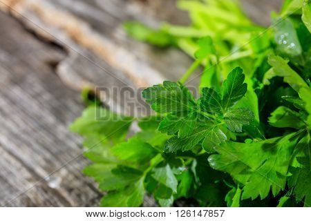 Branch of fresh green parsley closeup set on old wooden surface