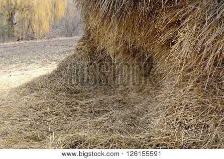 A stack of hay on the sown field