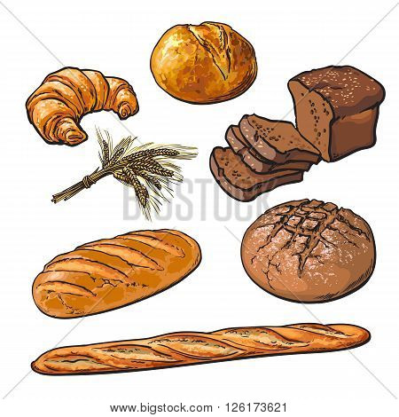 Set bread products, pastries on a white background, sliced loaf, French baguette, rye bread, wheat branch, cutting cakes, croissants, colored sketch style hand-drawn, bakery products, rooty