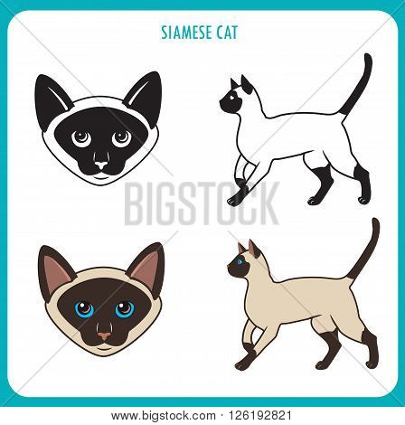 Siamese Cat Set. Face And Body. Vector On A White Background. Siamese Cat Vector Illustration. Siamese Cats For Sale. Siamese Cat Personality. Siamese Cat Breed. Siamese Cat Picture.