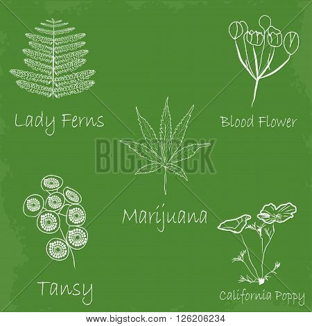 set of hand draw medecinal herbs. Set of medecinal herb sketch style.  Naural medecine herb set. Herb set isoated. Heal herb set sketch style panted isolated on green desk. Nature herb set isolated