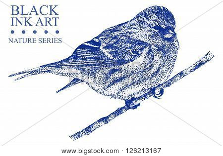 Illustration with bird Redpoll drawn by hand with black ink. Graphic drawing pointillism technique. Floral element for design