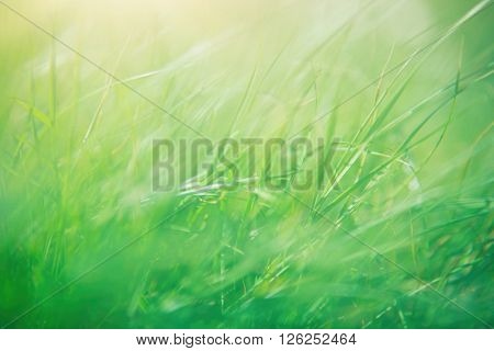 Green grass abstract background, spring sunny day, beautiful natural wallpaper, macro photography, shallow depth of field