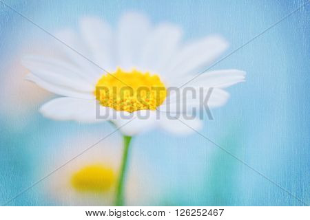 Closeup photo of a beautiful fresh white daisy flower over blue sky background, beauty of spring nature, shallow dof, floral textured wallpaper