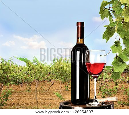 Red wine in glass and bottle on nature background