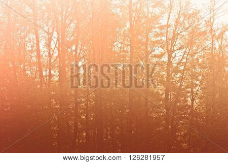 Forest Tree, Early Morning Magic Sunset