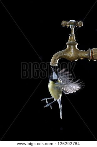 Big Tit Drinking From Faucet