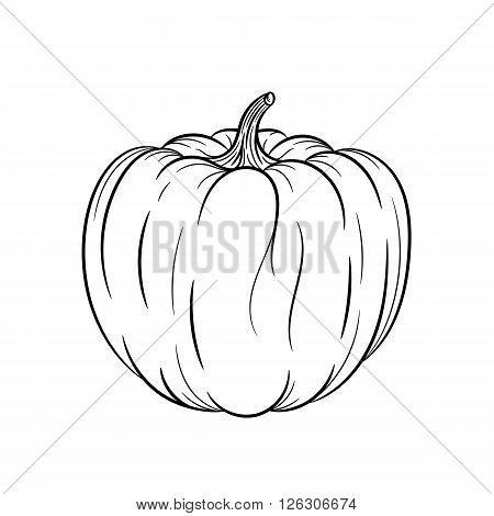 Pumpkin. Vector hand drawn pumpkin illustration isolated on white background - stock vector