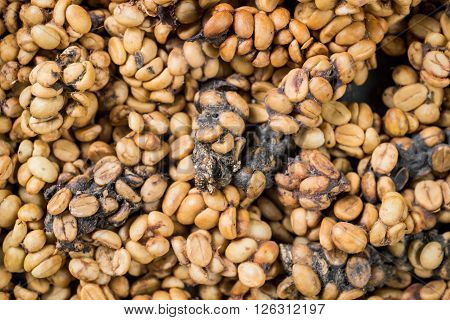 Coffee series : Coffee beans excreted by civet