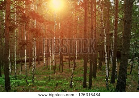 Summer forest landscape - mixed forest and aged stone remnants between the trees known as Chashkovskoe stone settlement situated in Southern Urals Russia. Soft focus processing.