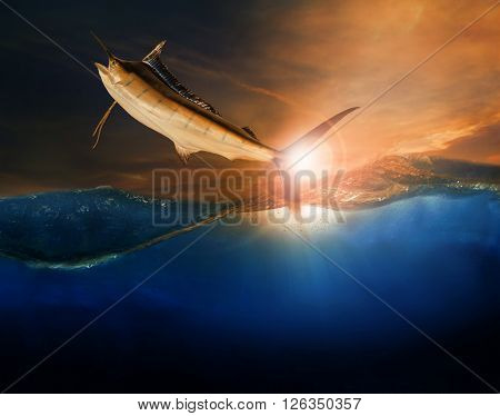 sailfish flying over blue sea ocean use for marine life and beautiful aquatic nature