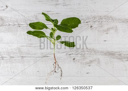 Green Sprout Suspended In Mid Air