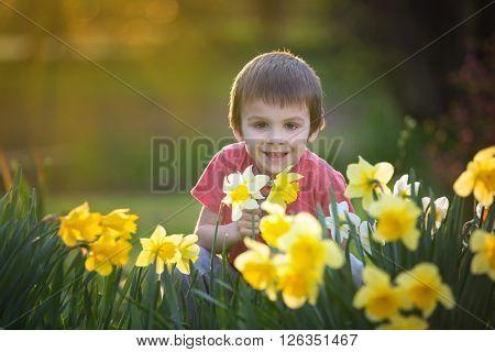 Beautiful Preschool Child, Boy, Sitting Amongst Daffodil Flowers In A Spring Garden
