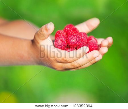 Little child holding tasty raspberry in hands