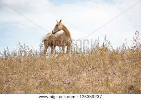 Phorizontal photo of the horse outdoors standing in the field