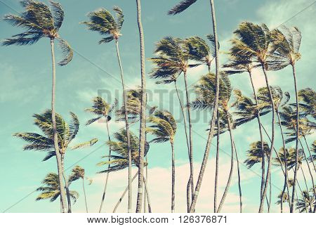 Retro Vintage Style Washed-Out Photo Of Wind-Blown Palm Trees In Hawaii