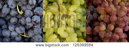 Collage of 3 kinds of grapes, blue, red and green