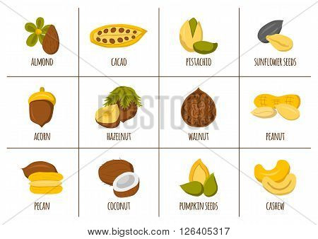 Vector cartoon nuts and seeds icons. Healthy organic snack. Cartoon nuts types: walnut almond hazelnut coconut cashew. Vegan protein source. Allergic product. Healthy vegan nutrition. Healthy oils
