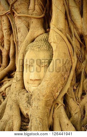 Buddha head encased in tree roots in Thailand