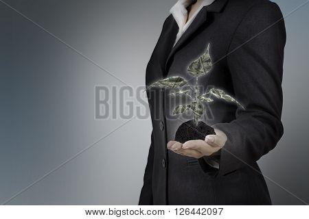 money tree glow on business woman hand