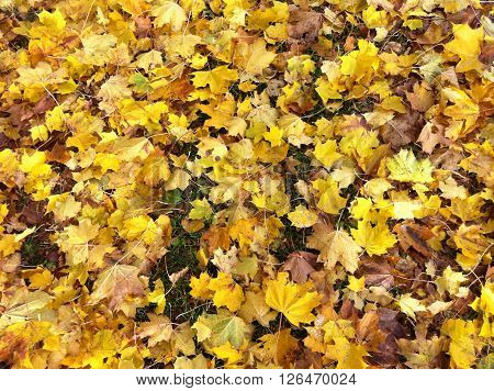 Yellow leaves on the ground on an autumn day
