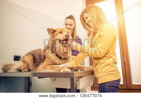 Veterinary doctor checking dog heart with medical tool. Owner comforting the animal