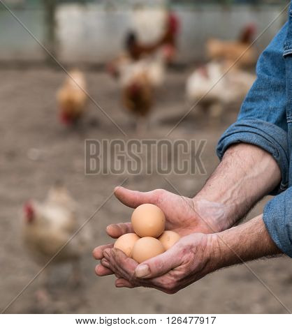 Farmer holding fresh organic eggs. Poultry yard