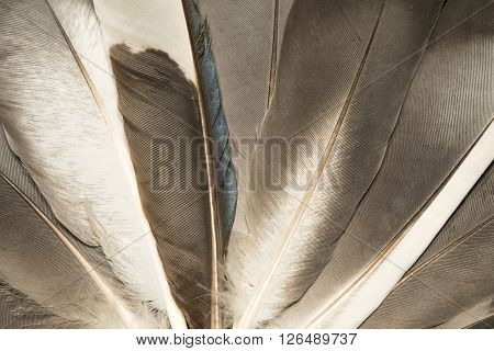 The gray feathers close up as background