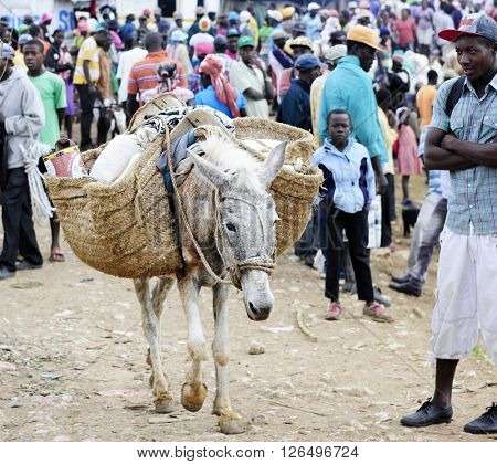 FOND BAPTISTE, HAITI - FEBRUARY 18, 2016:   A long donkey walking from the crowded market in Fond Baptiste with his side packs loaded with goods.